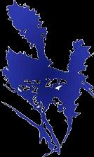 Fair Park Counseling Logo | Best Counselors In Tupelo MS | Best Counselors In Birmingham AL | Best Counselors In Huntsville AL
